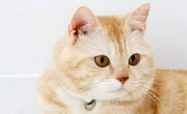 猫咪真的超可爱朋友攻略 朋友出现条件详解