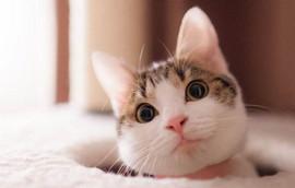 猫咪真的很可爱游戏攻略 猫咪真的很可爱朋友攻略