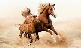 骑马与砍杀2马匹大全 骑马与砍杀2马匹属性排名